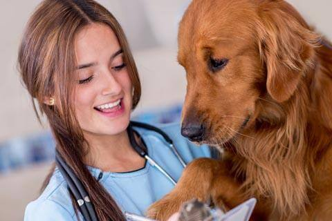 Veterinary Assistant with dog